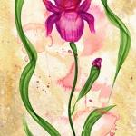 W Iris Red