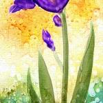 WW Iris Violet