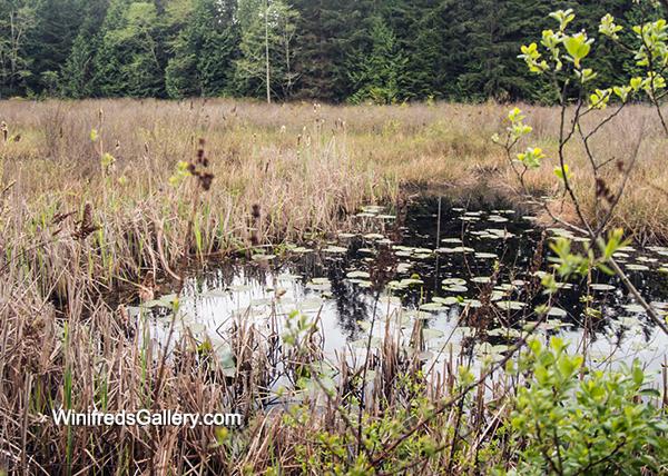 IW Wetland